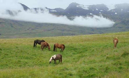 Faszien-Therapie am Pferd