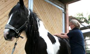 Physiotherapeutische Therapieansätze und Techniken am Pferd